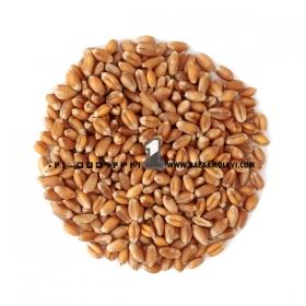 گندم فله (50 کیلویی)  اعلاء